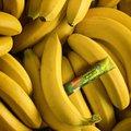 2 Caixas De Bananada Cremosa Flormel Zero ACUcar