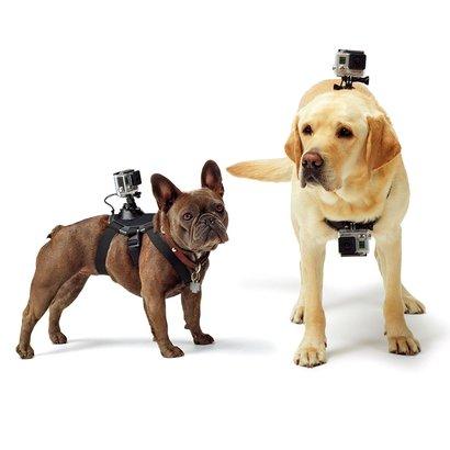 Suporte Canino GoPro - Unissex